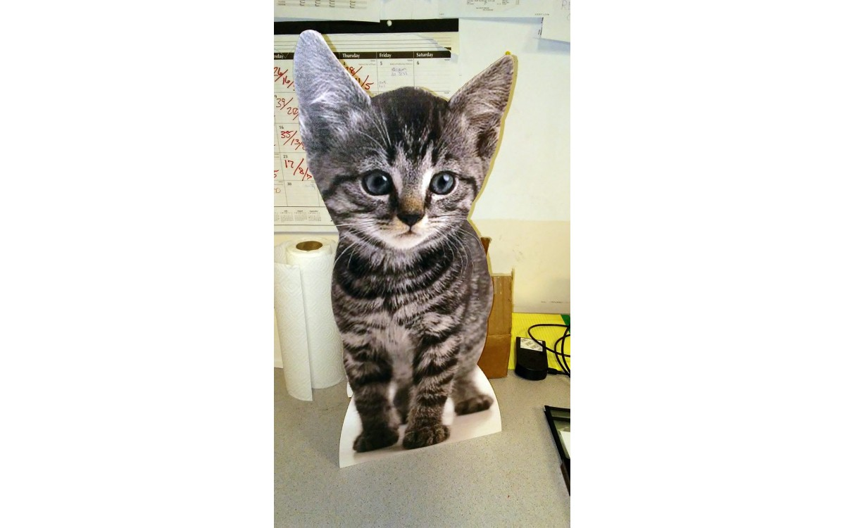 Custom Cat Cutouts
