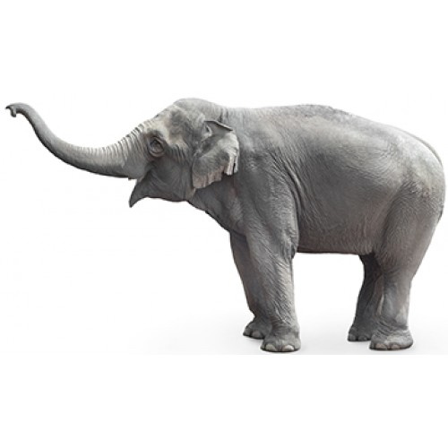 Asian Elephant Cardboard Cutout